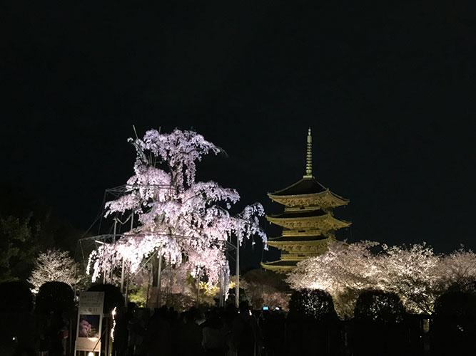 東寺の桜ライトアップ